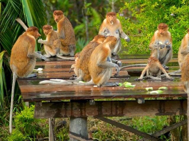 Tafi-Atome Monkey Sanctuary