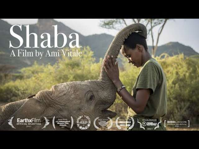 Celebrate World Elephant Day Watching this New Film About Rehabilitating Elephants to the Wild in Kenya