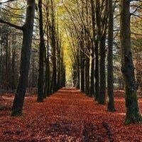 Annual Autumn Mystery Tour