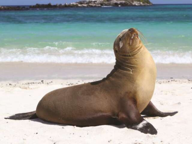 Ecuador & Galapagos Highlights