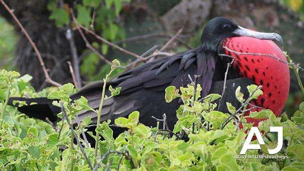 Galapagos Islands Birds