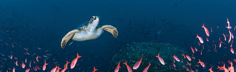Hurtigruten - Save 22% in the Galápagos Island