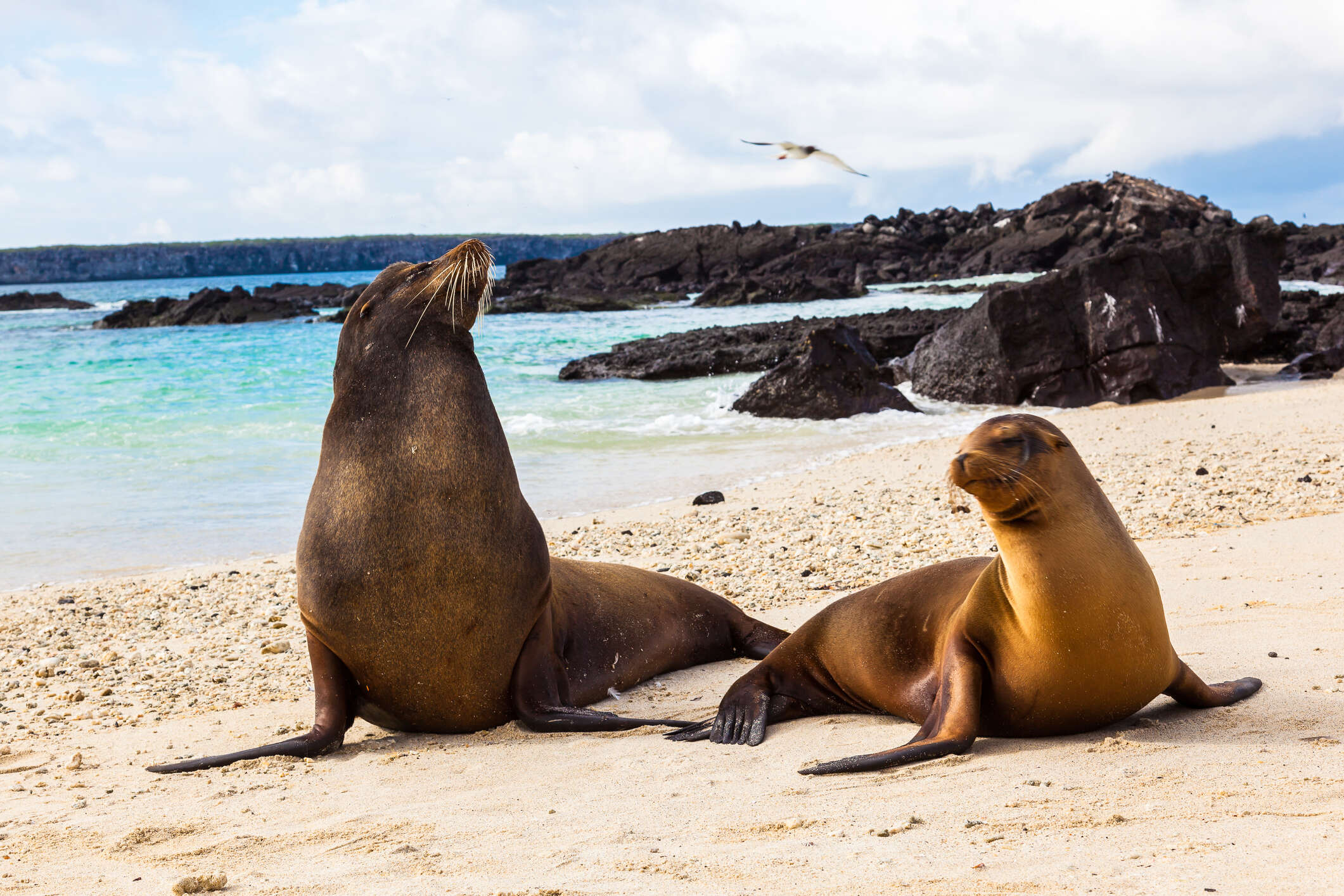 Ecuador & Galapagos Highlights