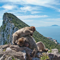 Gibraltar Beyond The Rock And Monkeys