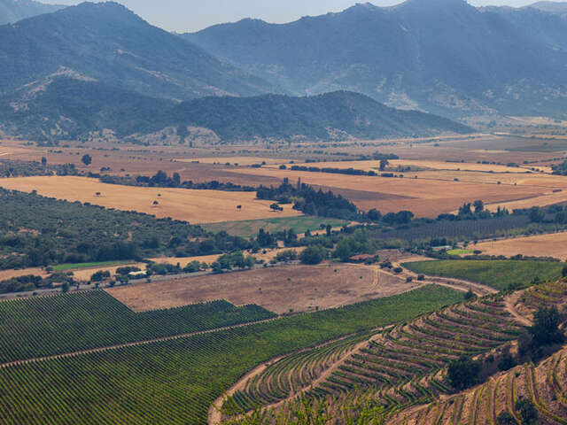 CHILEAN WINES & MORE