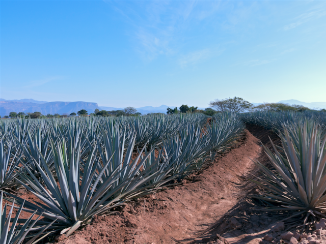 5 Fun Facts Plus 1 Travel-Inspired Tequila Recipe