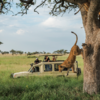 G Adventures' Adds 12 Tours to its 'Jane Goodall Collection' to Support Conservation and Responsible Wildlife Tourism