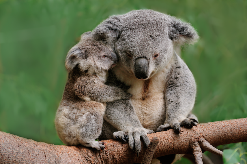 How You Can Help Now in Australia - Hint: It's Not Knitting Another Koala Cozy