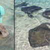 Meet the Stingray Whisperer of the Bahamas