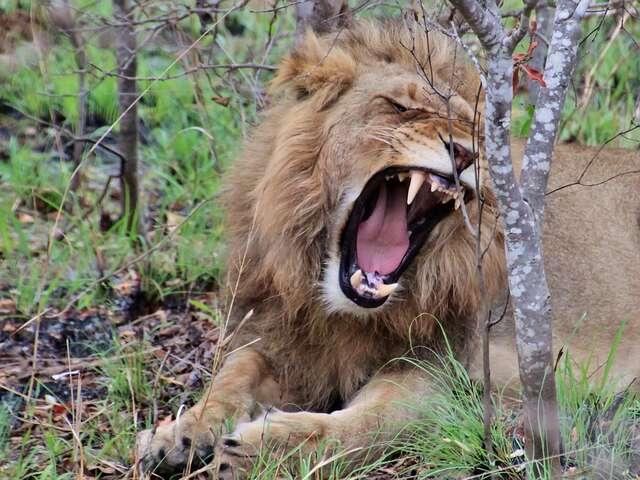 Stellenbosch - Johannesburg - Pilanesberg National Park