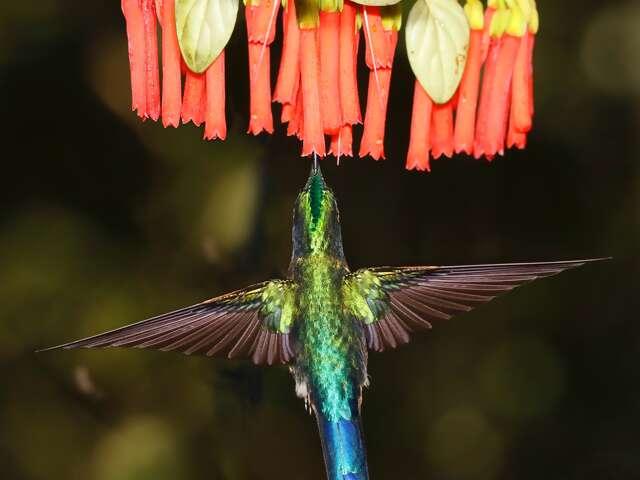 Ecuador and Galapagos Highlights