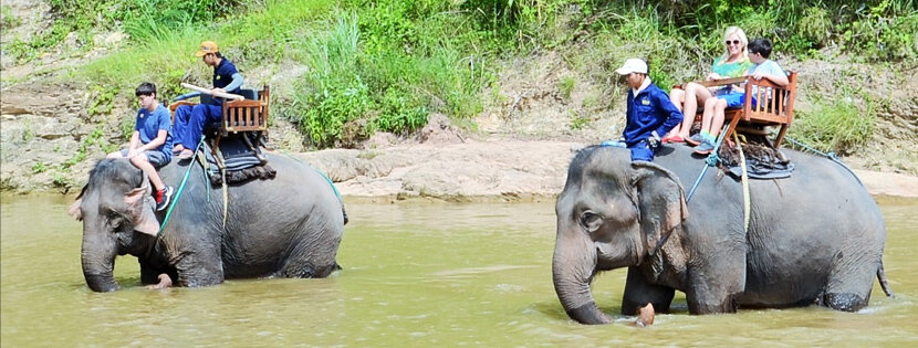 Lao Jungle