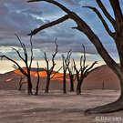 NAMIBIA & KALAHARI DESERT April 21-May 9, 2014