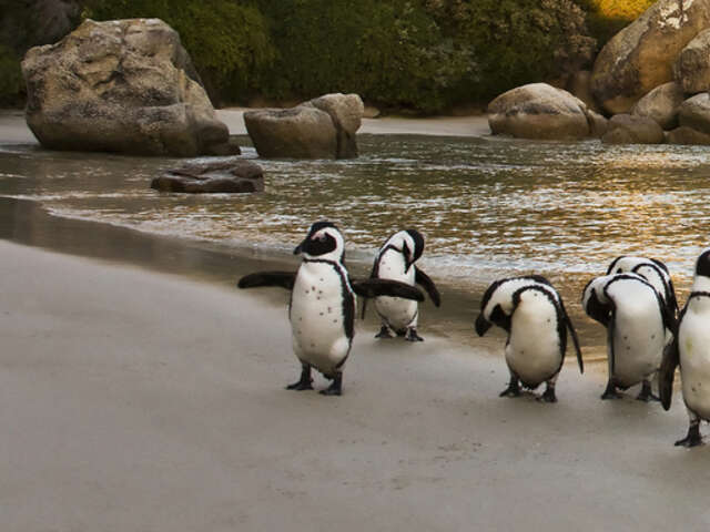 Tauck tours and BBC World Epic South Africa family adventure
