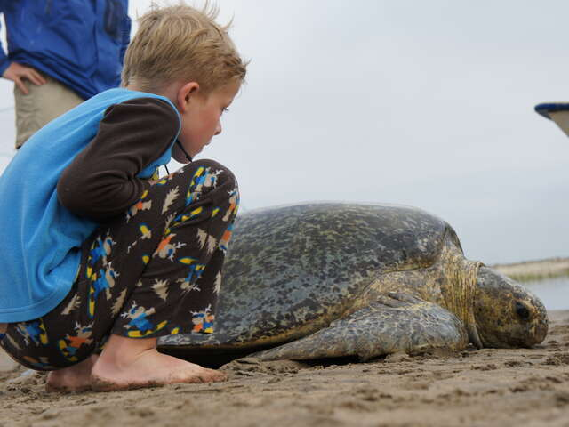 Gray Whale and Sea Turtle Adventure