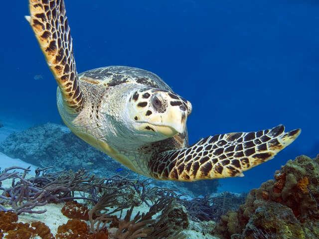Secrets Akumal, Riviera Maya: Pure and Exclusive