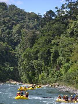 Rios Tropicales celebrates 31!