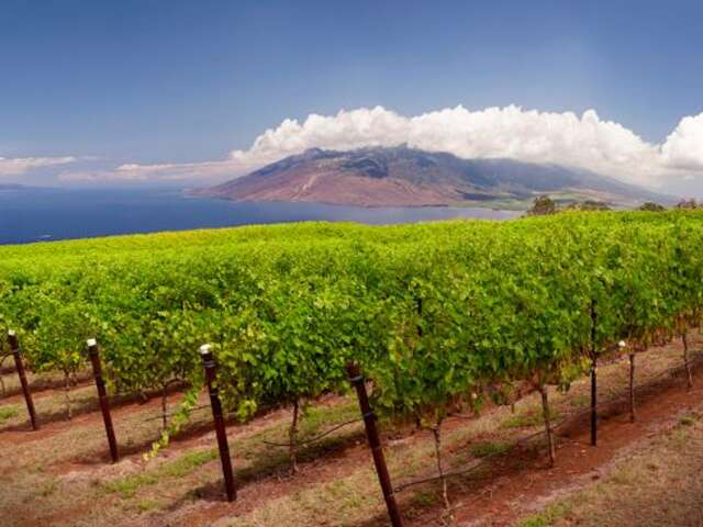 10 of the World's Most Unusual Wineries