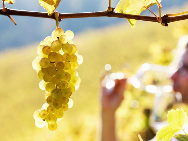 Carriage House Travel Ambassador Program – Wine Cruises