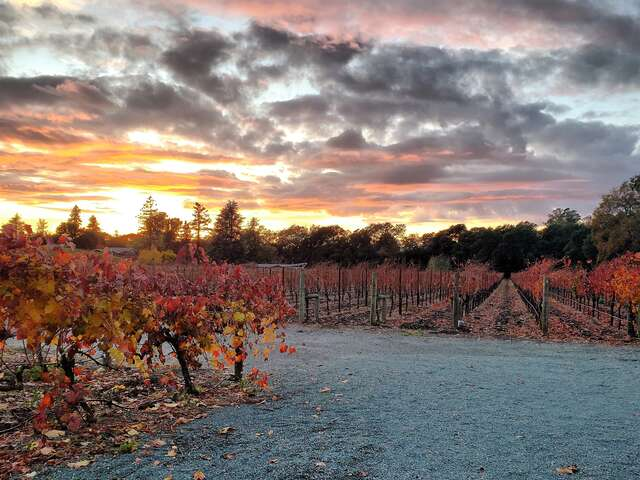 A Rainbow of Colors-Fall Napa Valley Culinary Immersion Journey To the Hidden Enclaves of Private Wineries, Kitchens and Gastronomic Venues