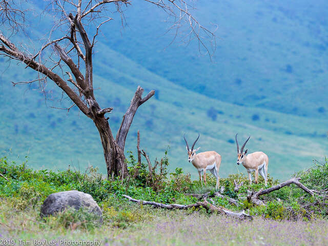 On an African Safari with Tauck: Beyond Your Wildest Dreams