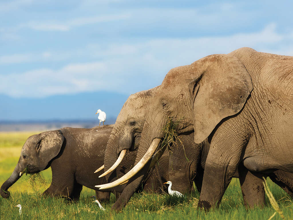East Africa Odyssey Super Special