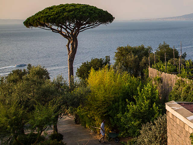 Save 15% while Local Living in Italy - Sorrento with G Adventures