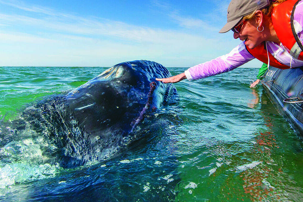 Getting Personal with California Gray Whales