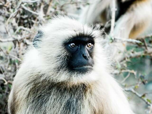 Responsible Travel: An Easy Guide to Ethical Animal Tourism