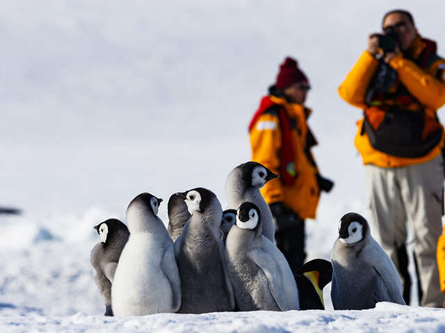 Quark Expeditions: A Leader in Polar Adventure