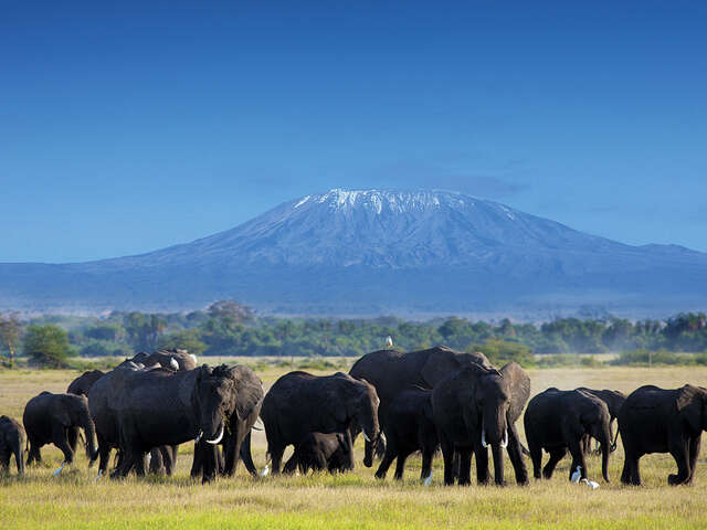 Goway - Botswana Luxury Escape, up to 70% off