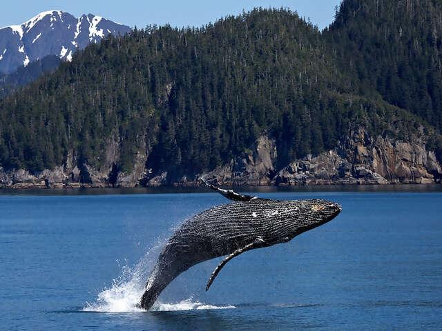 Globus - Alaska's Nature's Best Tour