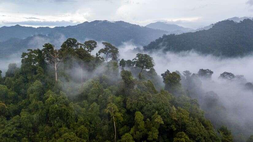 Escorted! Monteverde Cloud Forest January 2023