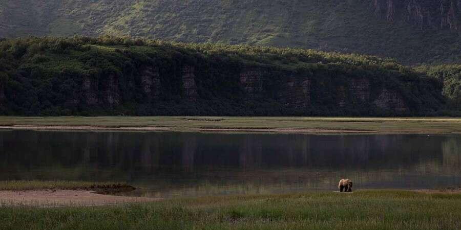 Seeking out Brown Bears - Kinak Bay