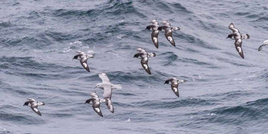 The Legendary Drake Passage - Drake Passage - At sea