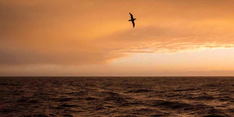 The Voyage North - The Drake Passage - At sea
