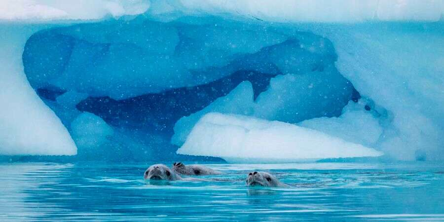 Penguins, Icebergs and the Antarctic Circle - Antarctica