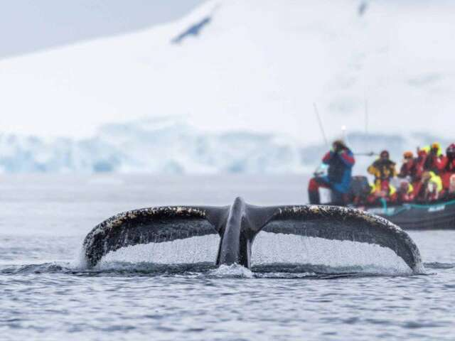 Exploration of Antarctica, Chilean Fjords and Patagonia