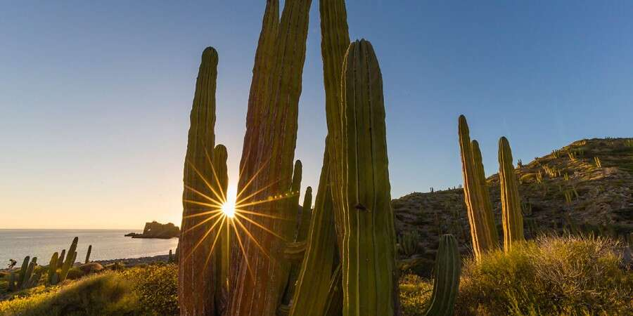 Reptiles & Cacti - Isla Santa Catalina, Mexico - Full Day