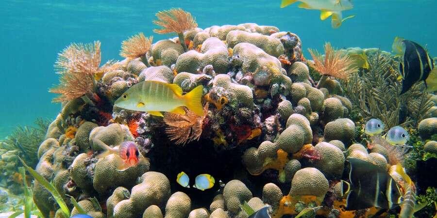 Beautiful Bahamanian Resort - Nassau, The Bahamas