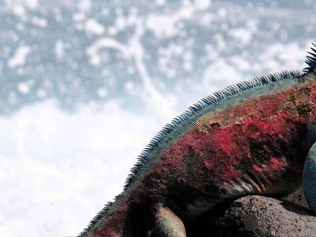 Costa Rica and Peru – Inca Mysteries and Galápagos Islands
