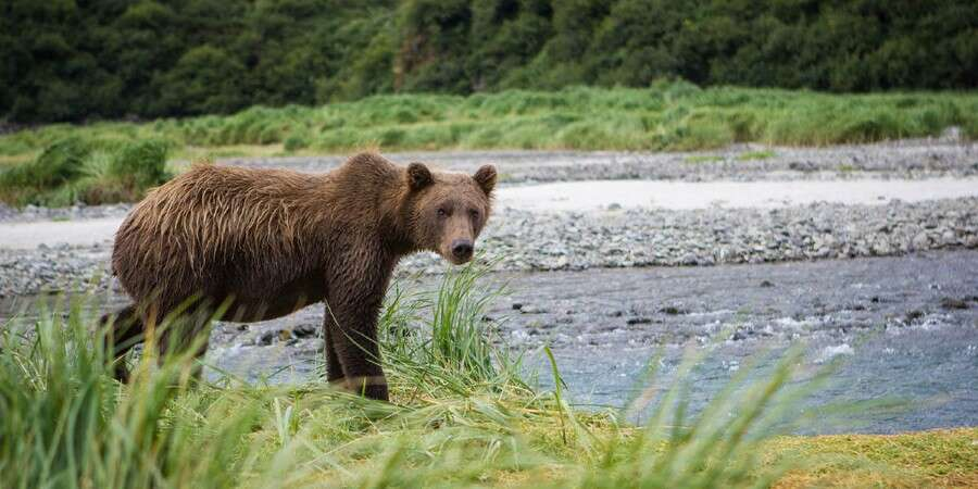 Seeking out Brown Bears - Kinak Bay