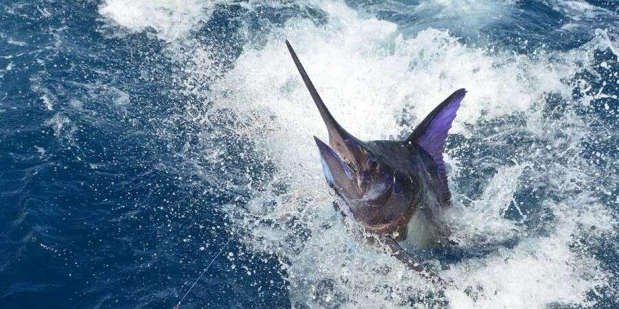 Marvellous Marine Life  - Puerto Piña, Panama