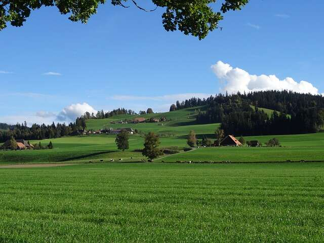 Tuesday, August 4: Emmental