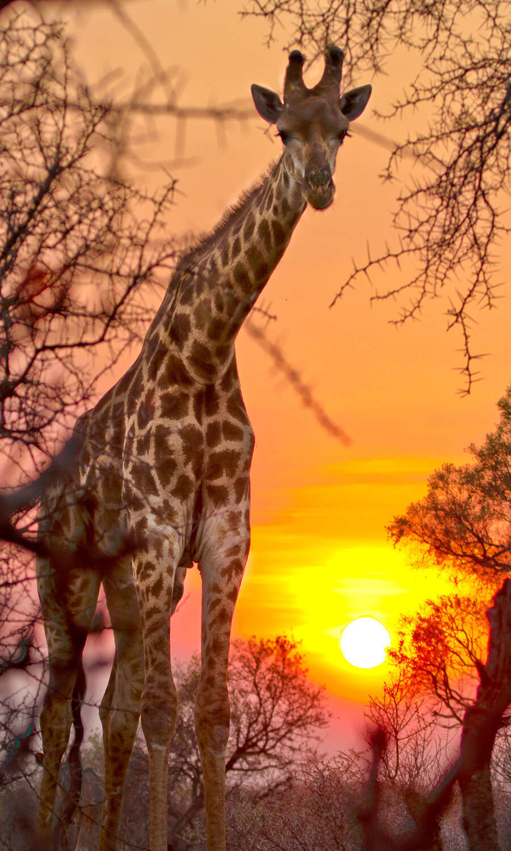 Stellenbosch- Karongwe Game Reserve