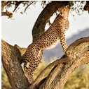Africa | Sterling Travel Group