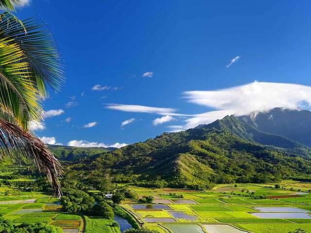 Hawaiian Discovery Premier Summer 2019