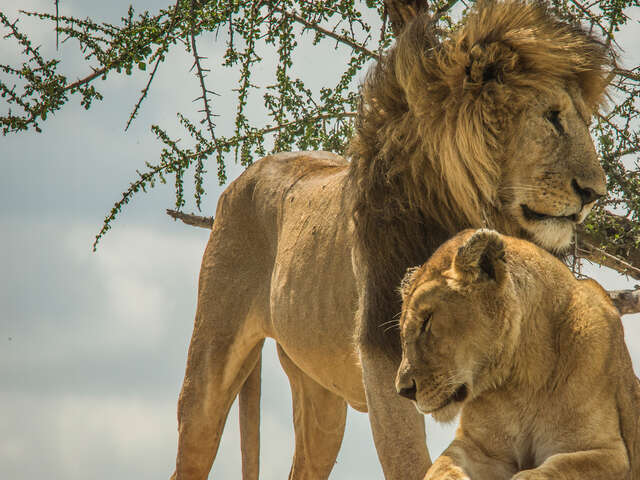Wildlife Parks of Tanzania