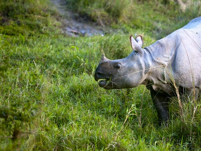 Chitwan Independent Adventure and Homestay