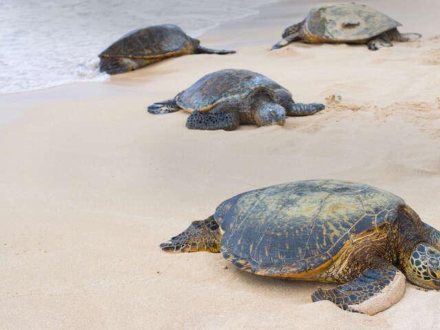 Turtles & Tortuguero Independent Adventure